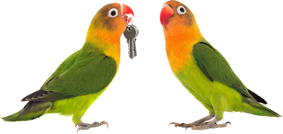 two parrots with keys to a home